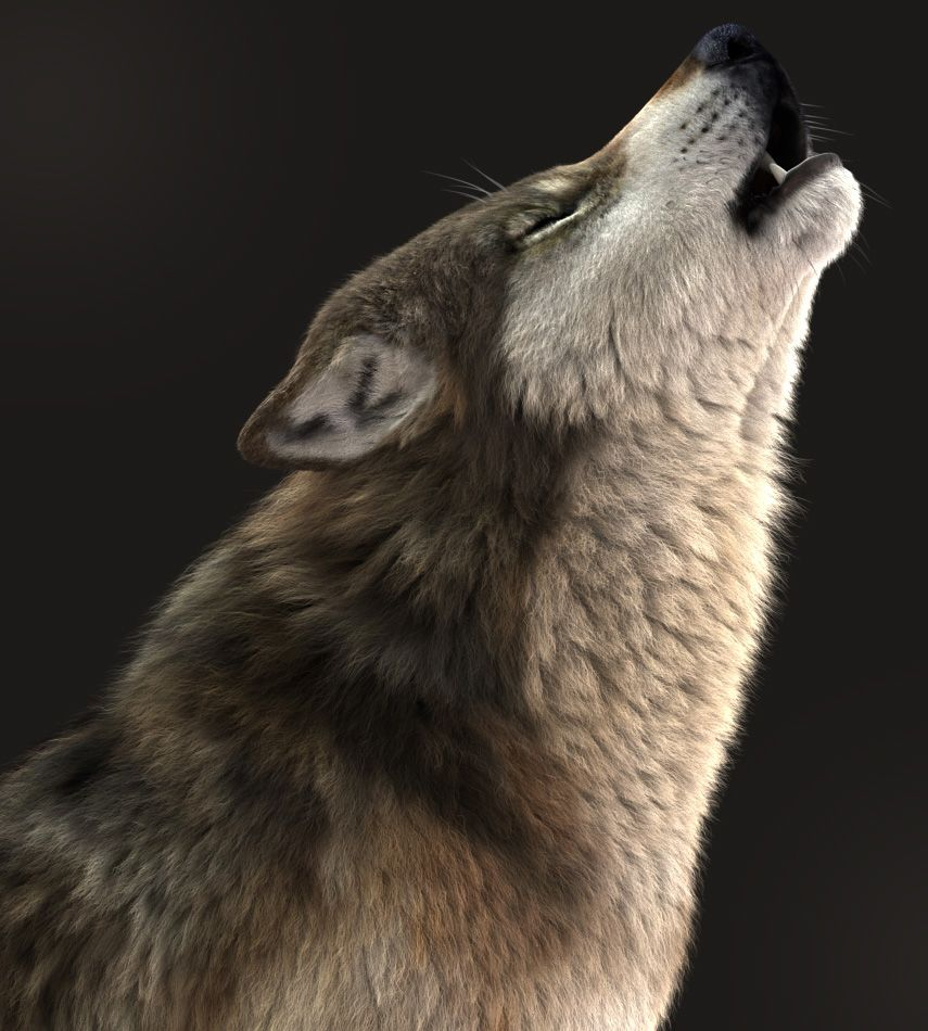 How To Make A 3D Wolf Howl At The Moon In Maya | The Rookies