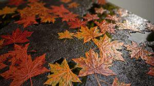 Creating a Procedural Autumn Leaf Covered Floor in Substance Designer
