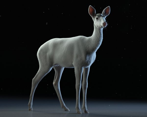 A Beginners Guide to Creating a 3D  Deer